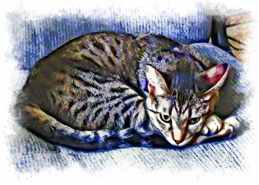 Cat Photograph - Ready For Napping by David G Paul
