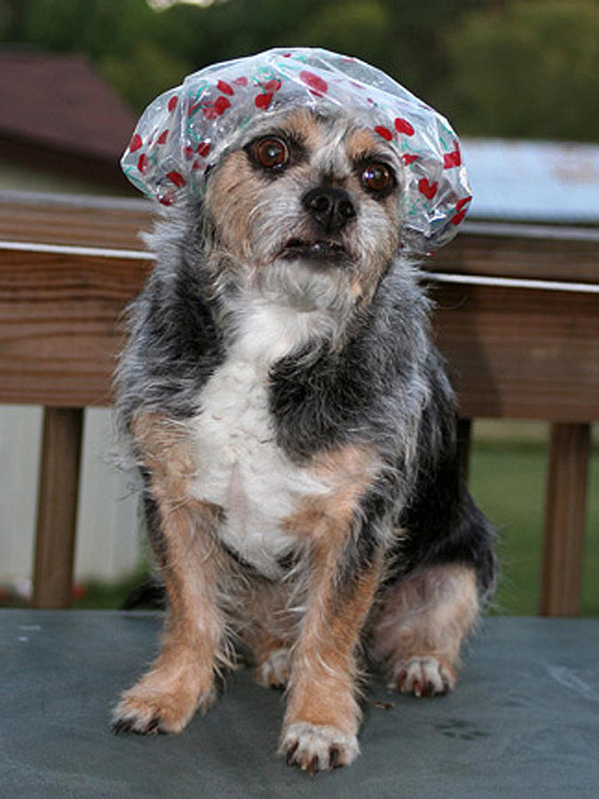 Dog Photograph - Ready For The Pool by Linda A Waterhouse