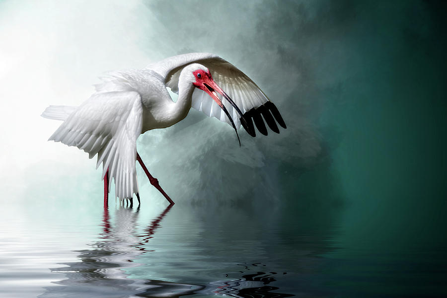 Bird Digital Art - Ready Or Not, Here I Come... by Cyndy Doty