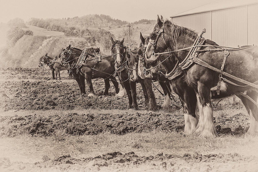 Work Photograph - Ready To Plow by Joe Hudspeth