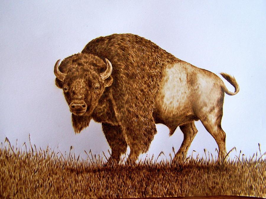 Buffalo Pyrography - Ready To Rumble by Adam Owen