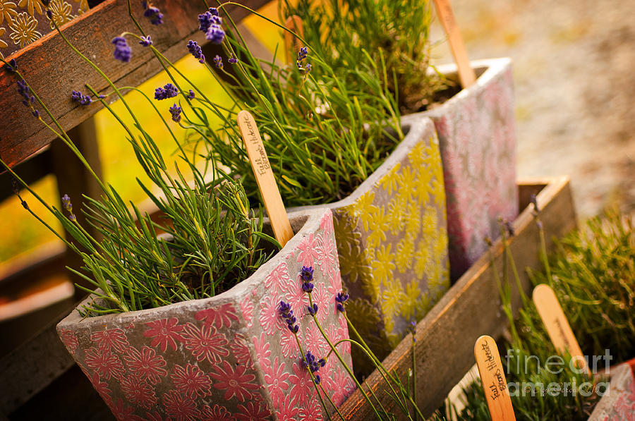 Lavender Photograph - Ready To Take Home by Joy Gerow