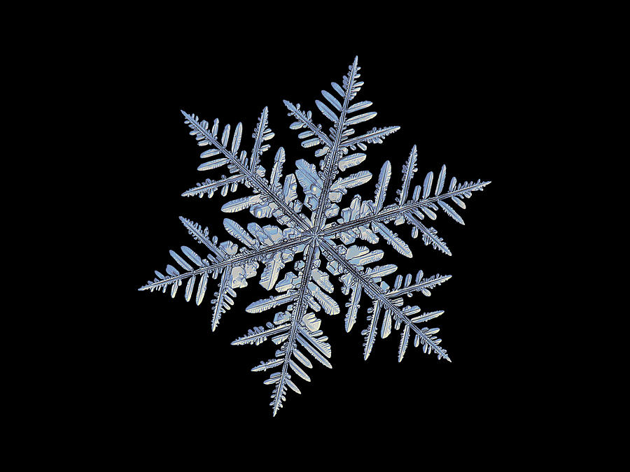 Real snowflake - Silverware black by Alexey Kljatov