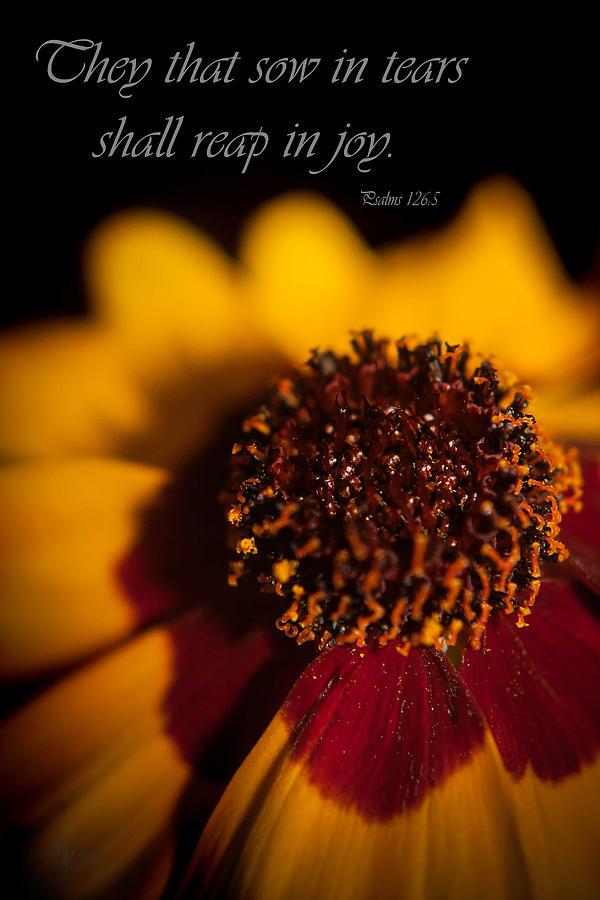 Psalms Photograph - Reap In Joy by Mechala Matthews