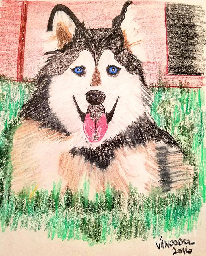 Rebel Drawing - Rebel The Husky  by Scott D Van Osdol