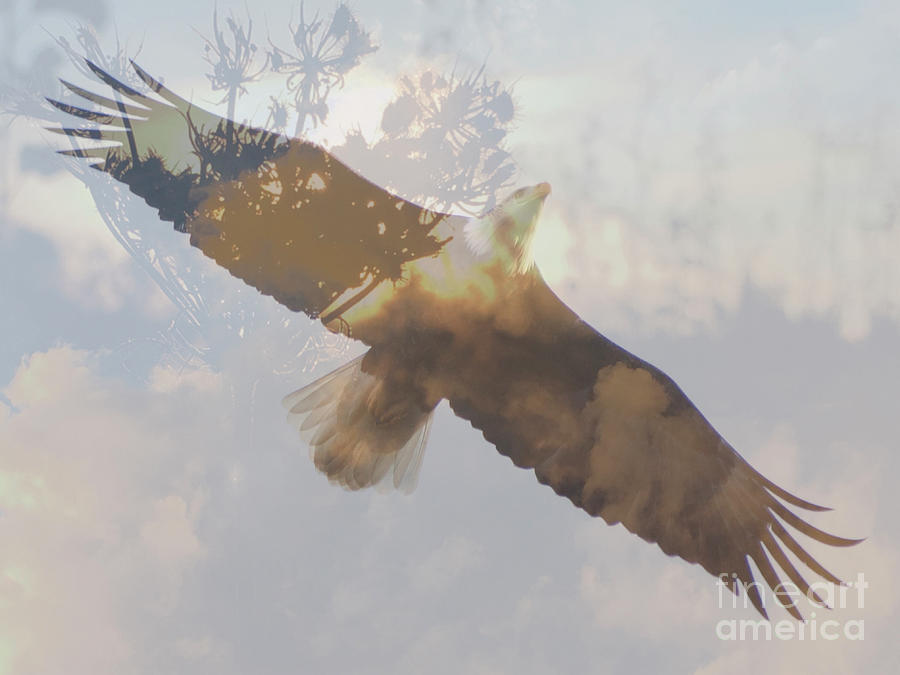 Where Eagles Soar by Chris Scroggins
