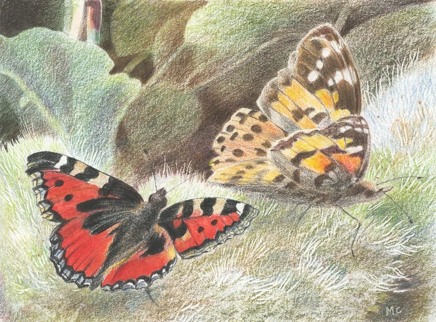Nature Drawing - Red Admiral And A Painted Lady by Maureen Carter