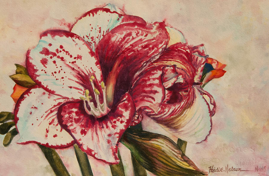 Red Amaryllis II by Heidi E Nelson