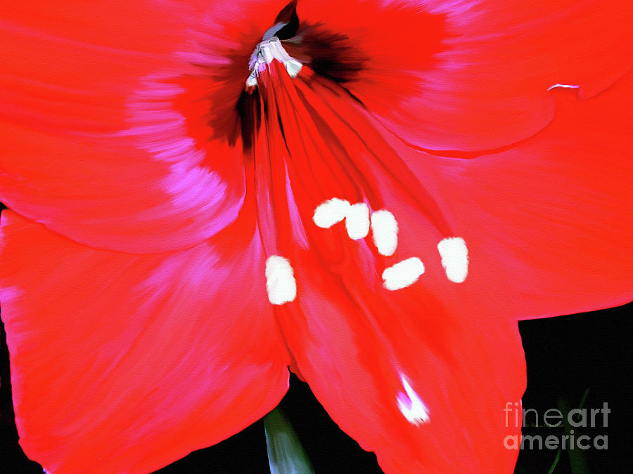 Red Amaryllis by Patricia Griffin Brett