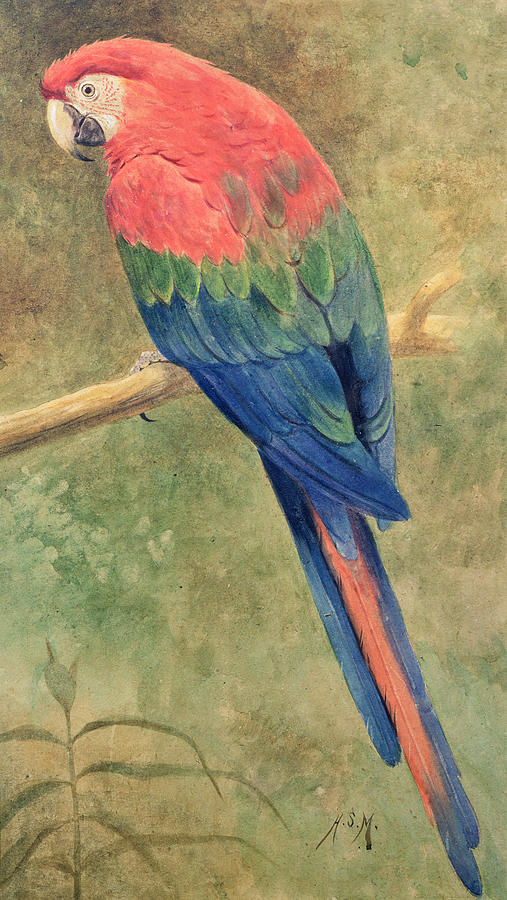 Red Painting - Red And Blue Macaw by Henry Stacey Marks