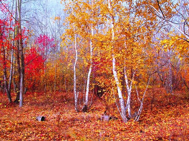 Landscape Painting - Red And Gold by Brechshuk Sergey