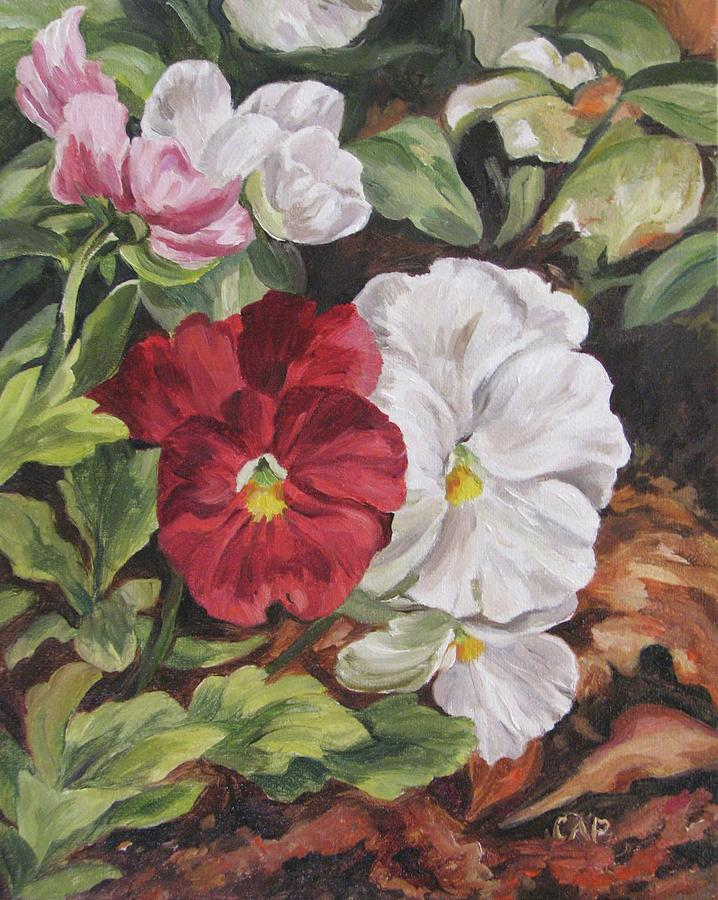 Garden Painting - Red And White Pansies by Cheryl Pass