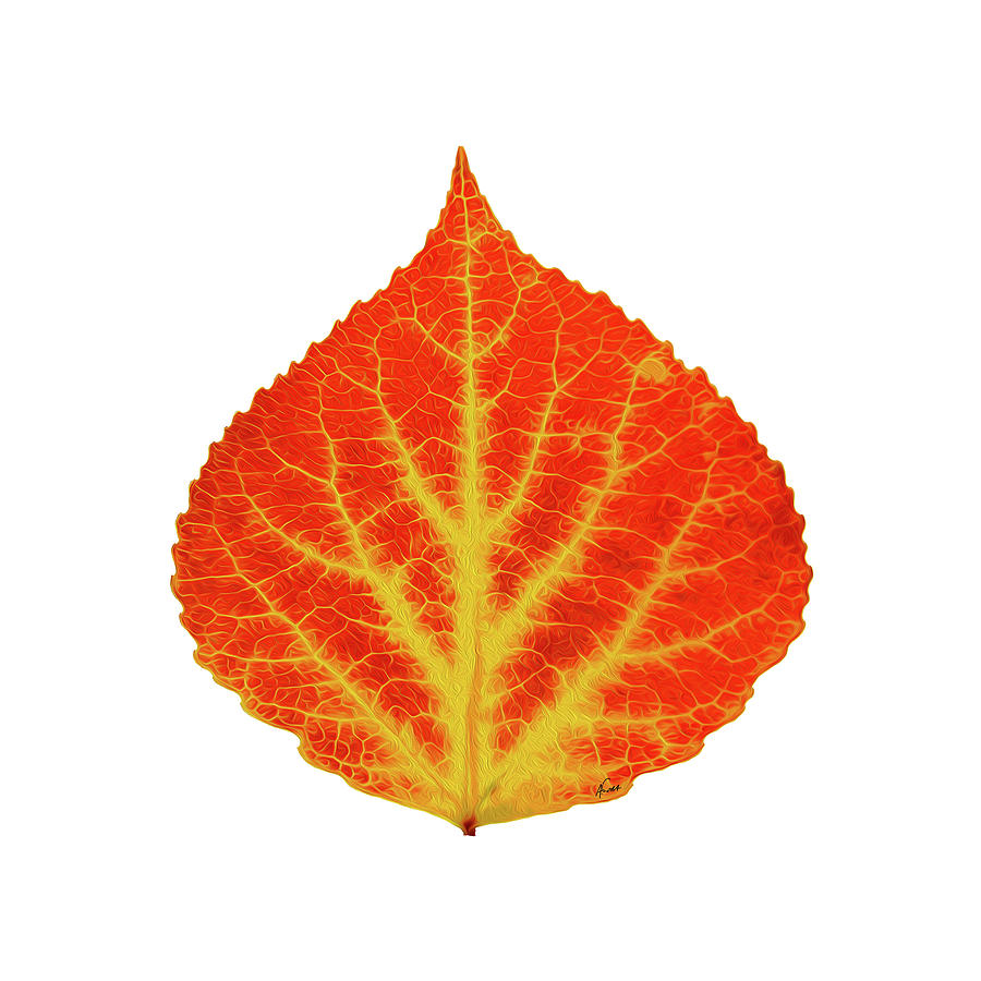 Aspen Leaf Digital Art - Red And Yellow Aspen Leaf 10 by Agustin Goba