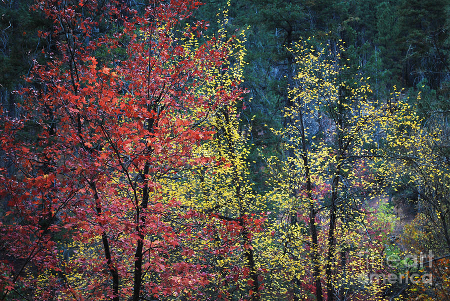 Landscape Photograph - Red And Yellow Leaves Abstract Horizontal Number 1 by Heather Kirk