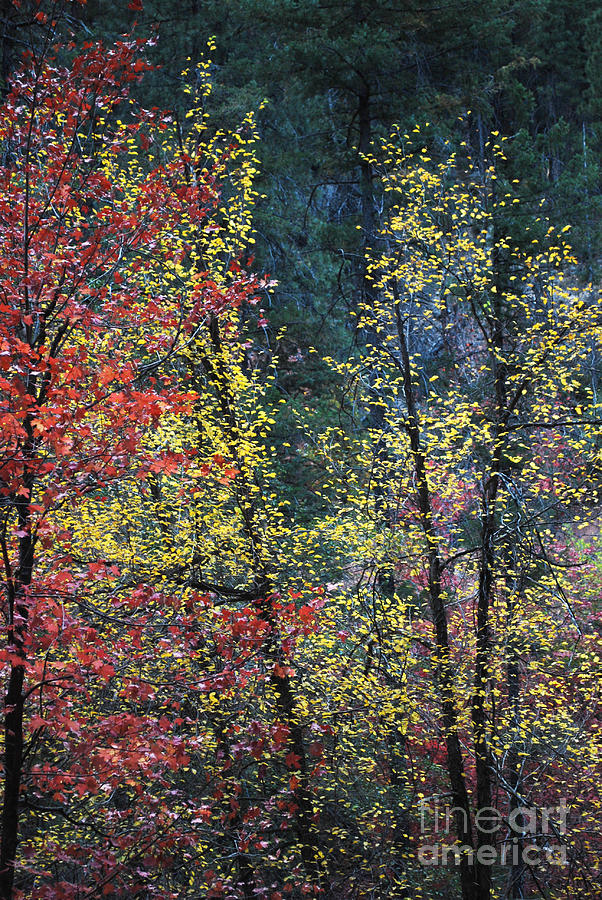 Landscape Photograph - Red And Yellow Leaves Abstract Vertical Number 2 by Heather Kirk