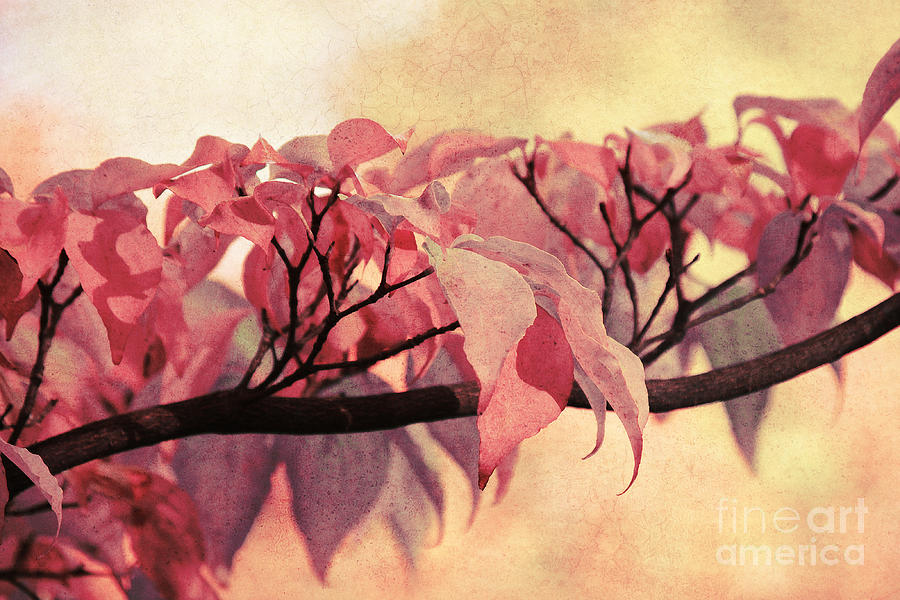 Autumn Photograph - Red Autumn Day by Angela Doelling AD DESIGN Photo and PhotoArt