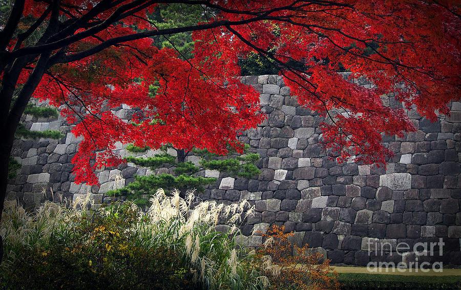Zen Photograph - Red Autumn by Eena Bo
