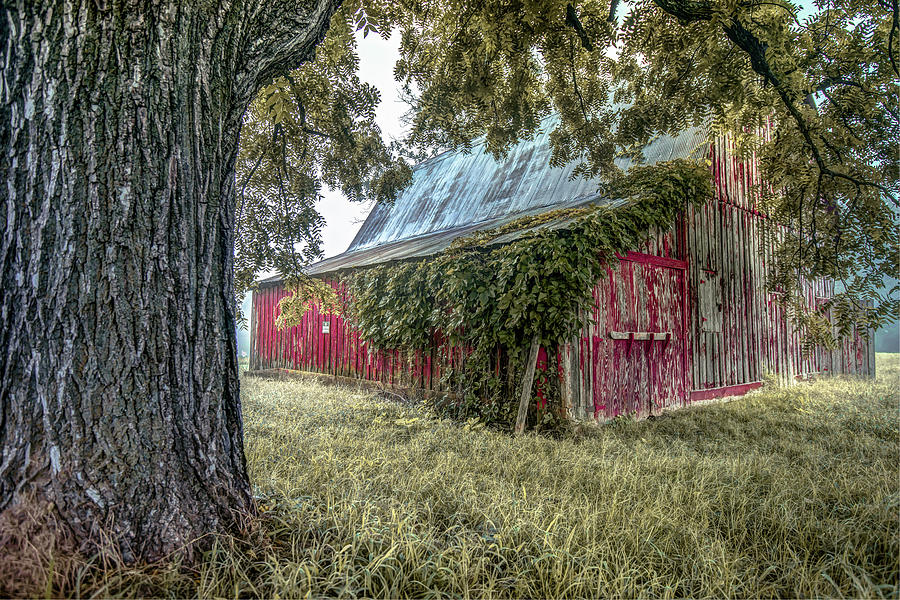 Red Barn And Framing Tree Photograph by Gregory Ballos