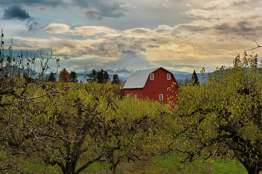 Hood Photograph - Red Barn At Pear Orchard by David Gn