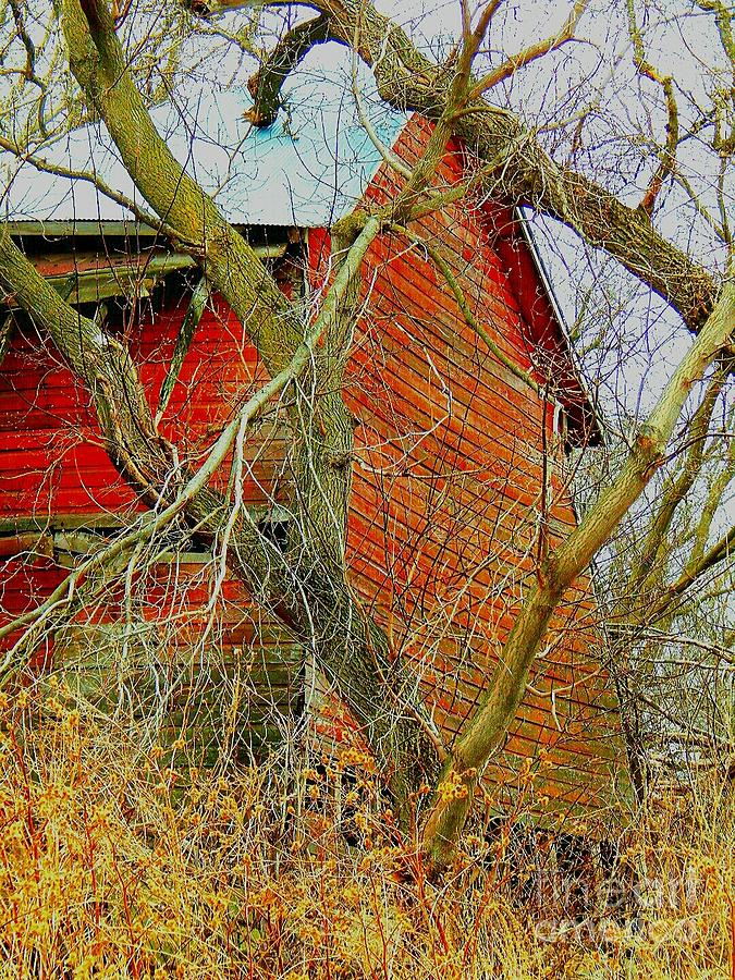 Red Barn Photograph - Red Barn Behind The Trees by Curtis Tilleraas