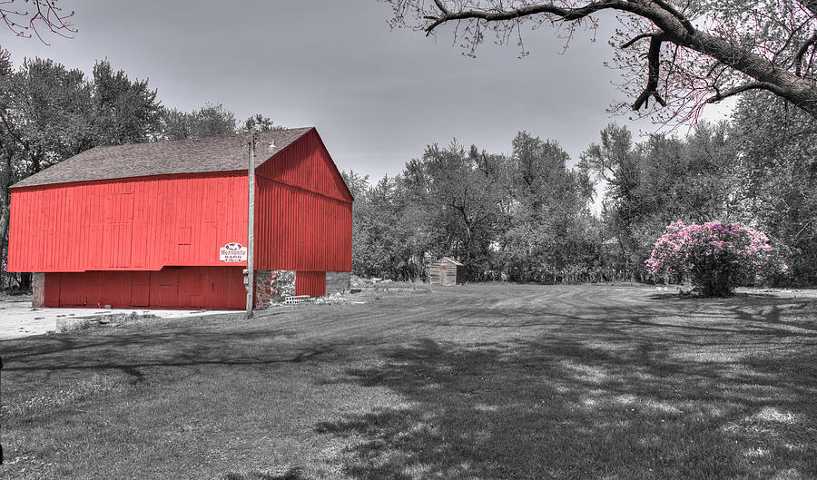 Red Barn Photograph - Red Barn Spring Lilacs  by Shane Mossman