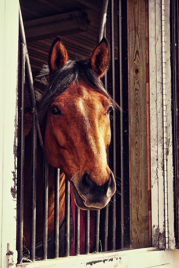 Horse Photograph - Red Bay by JAMART Photography