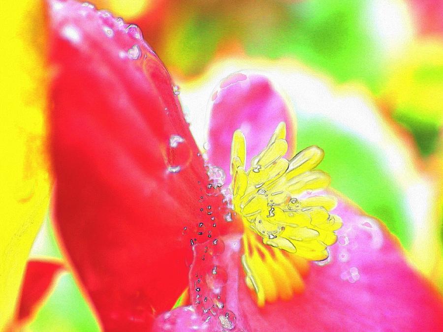 Begonia Digital Art - Red begonia by Kumiko Izumi