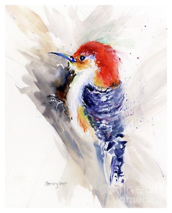 Red-bellied Woodpecker by Christy Lemp
