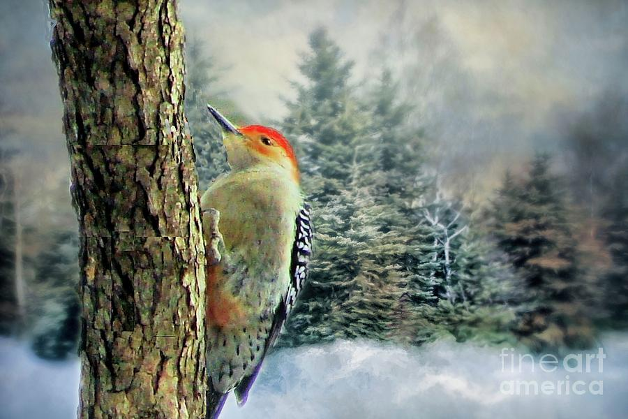 Red Bellied Woodpecker  by Janette Boyd