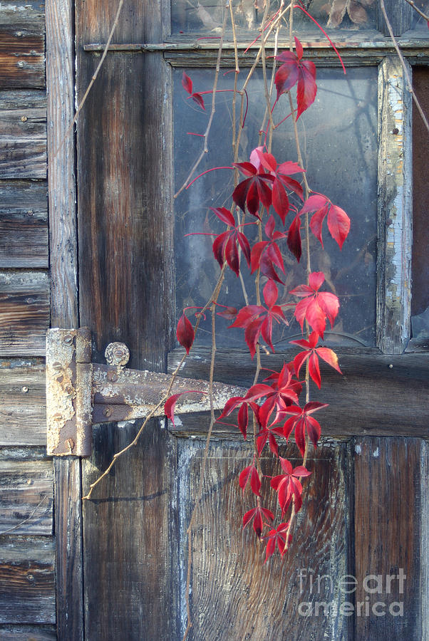 Red Leaves Pastel - Red by Bernadette Kazmarski