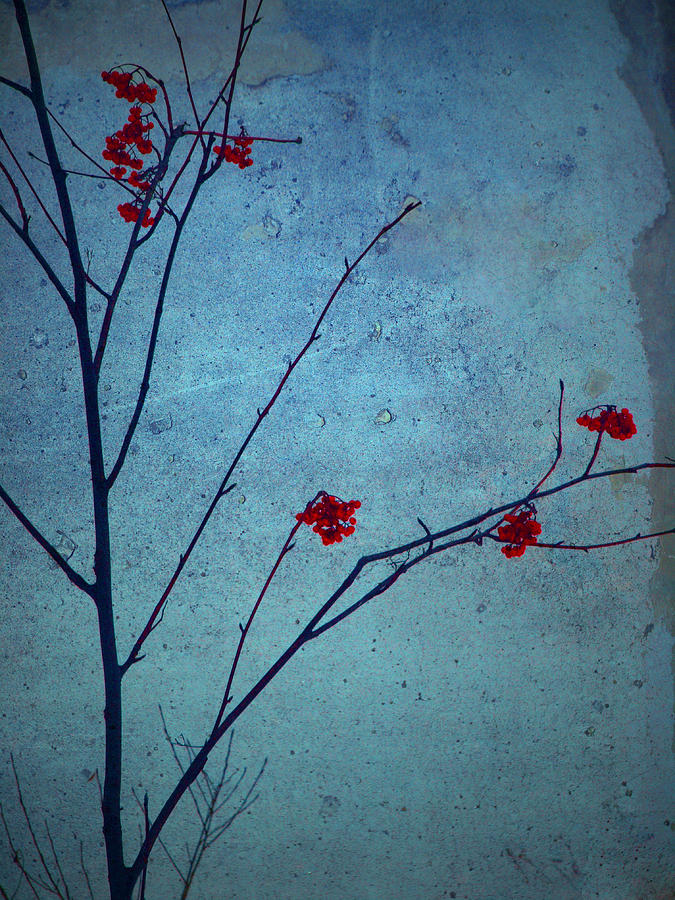 Simplicity Photograph - Red Berries Blue Sky by Tara Turner