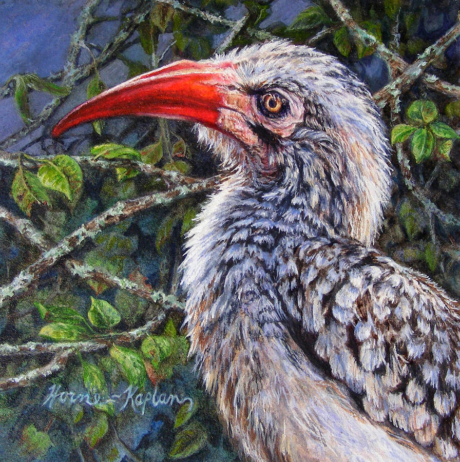 Red Billed Hornbill by Denise Horne-Kaplan