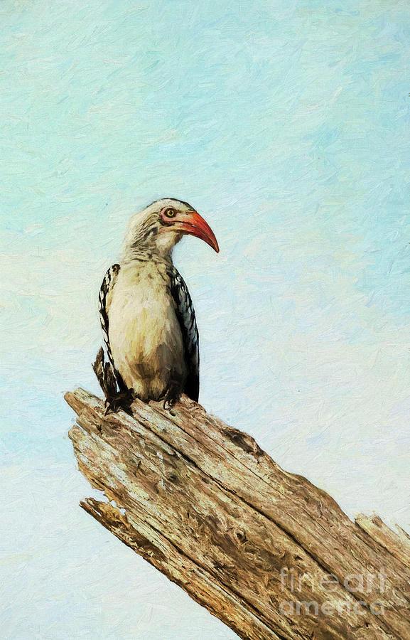 Red billed Hornbill by Liz Leyden