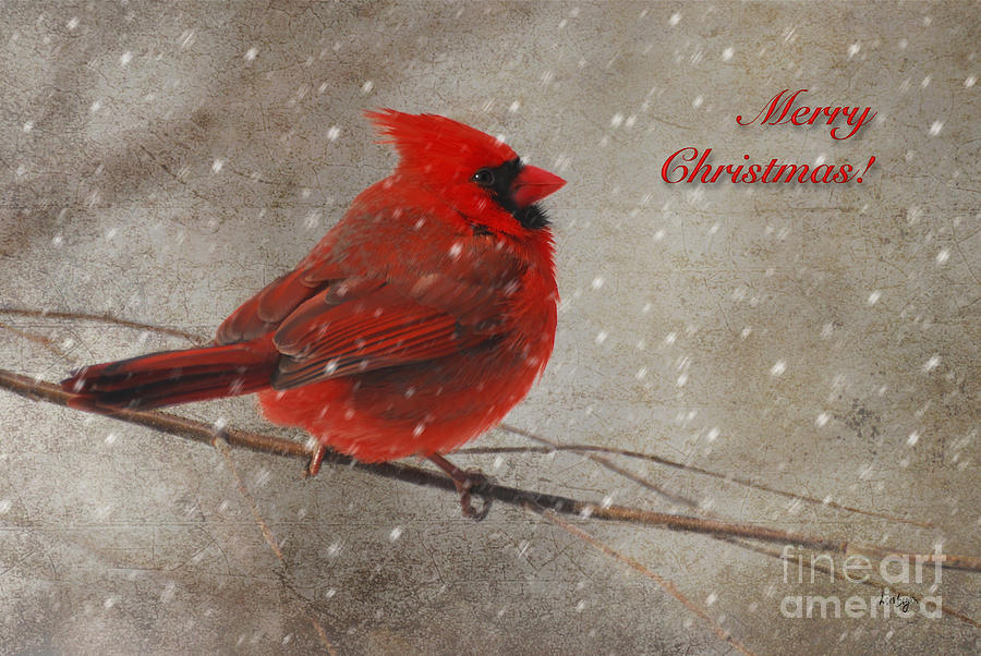 Christmas Photograph - Red Bird In Snow Christmas Card by Lois Bryan