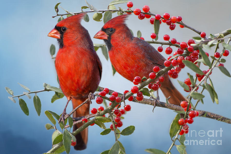 Image result for birds and berries