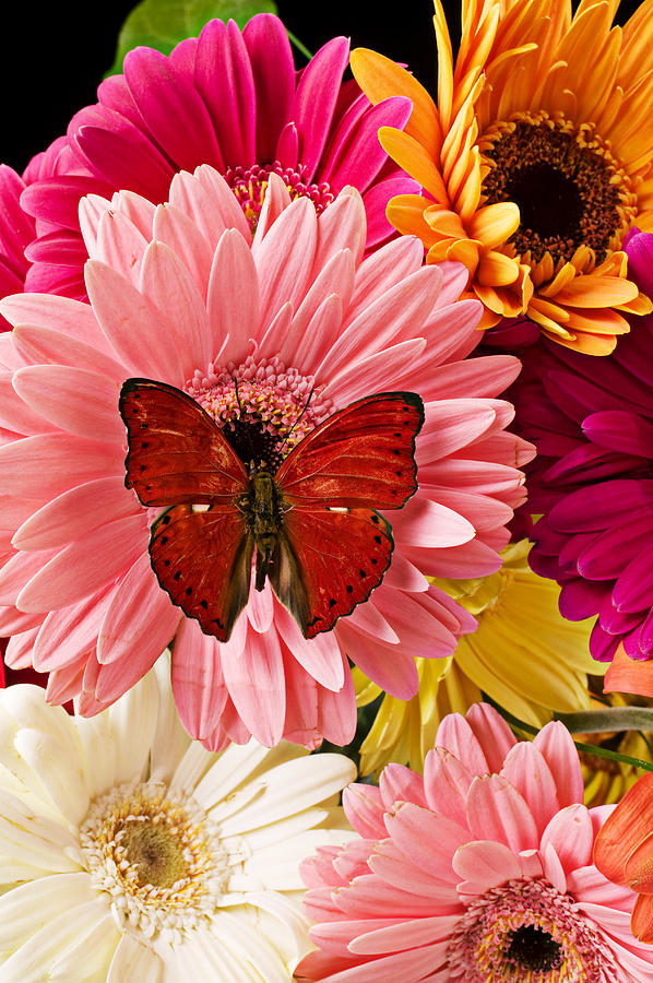 Indoors Photograph - Red butterfly on bunch of flowers by Garry Gay