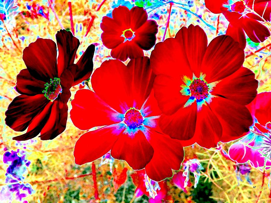 Floral Digital Art - Red Cosmos by Will Borden