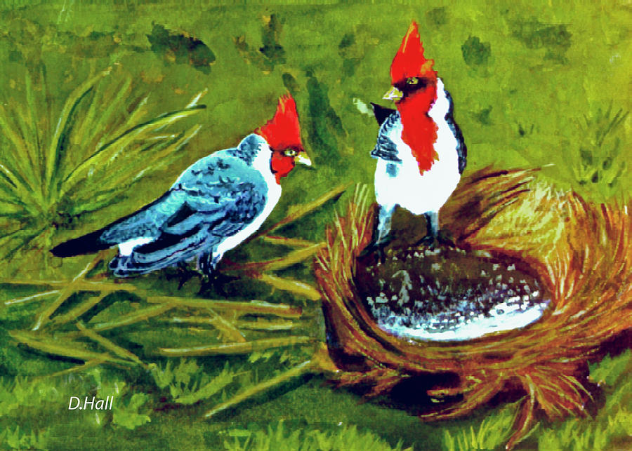 Hawaii Artist Painting - Red-crested Cardinal Birds #77 by Donald k Hall