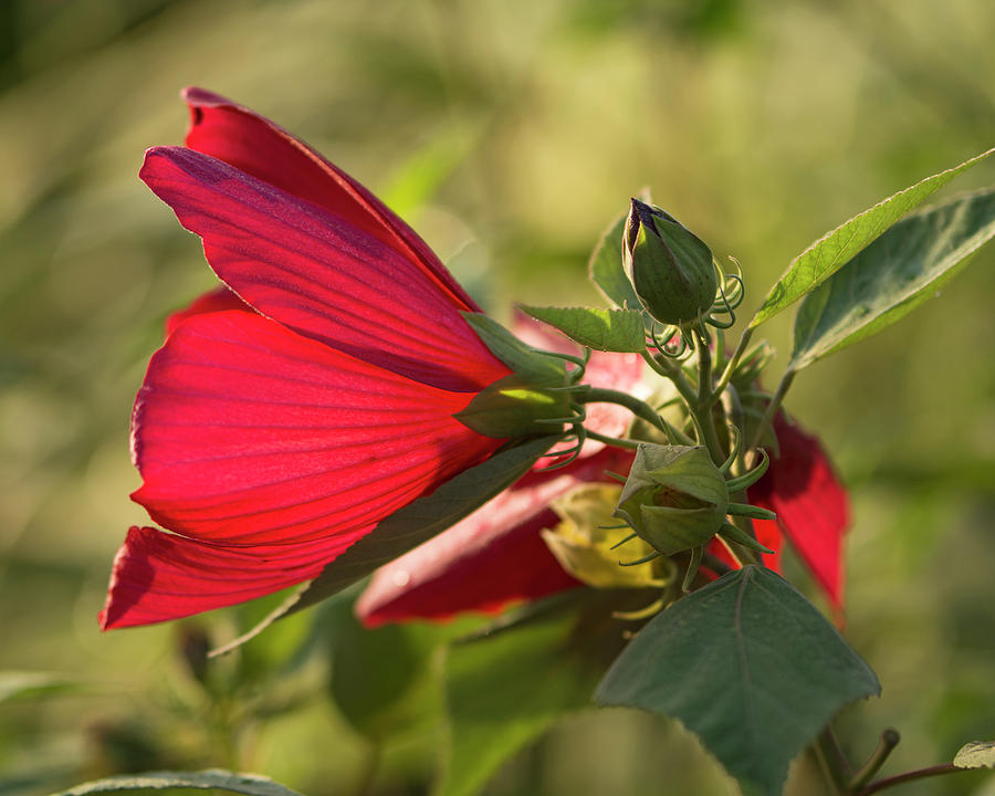 Red Photograph - Red by Deborah Ritch