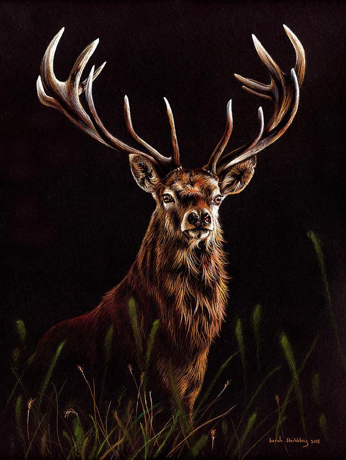 red deer pastel drawing painting by sarah stribbling. Black Bedroom Furniture Sets. Home Design Ideas