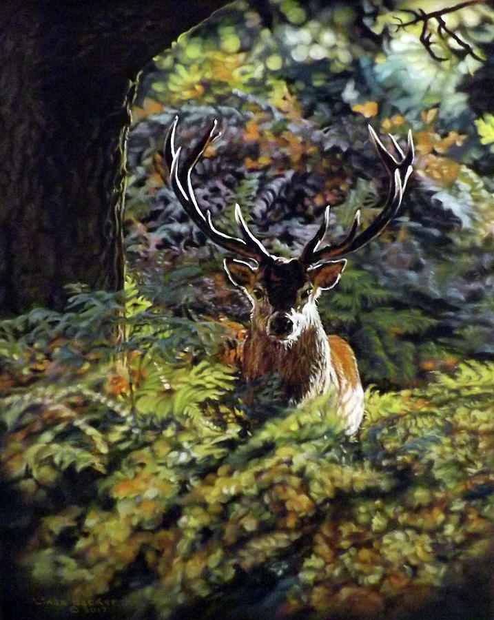 Red Deer Stag by Linda Becker