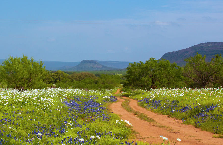 Fredericksburg Photograph - Red Dirt Road With Wild Flowers by Brian Kinney