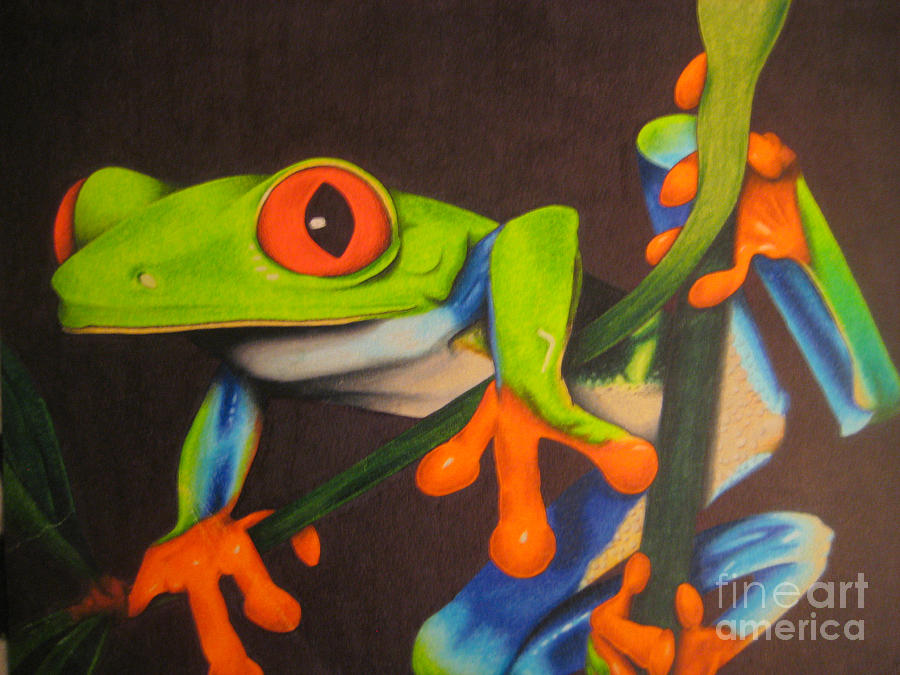 Frog Drawing - Red Eye Tree Frog by Brian Schuster