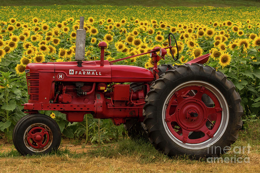 Red Farmall Tractor by Barbara Bowen