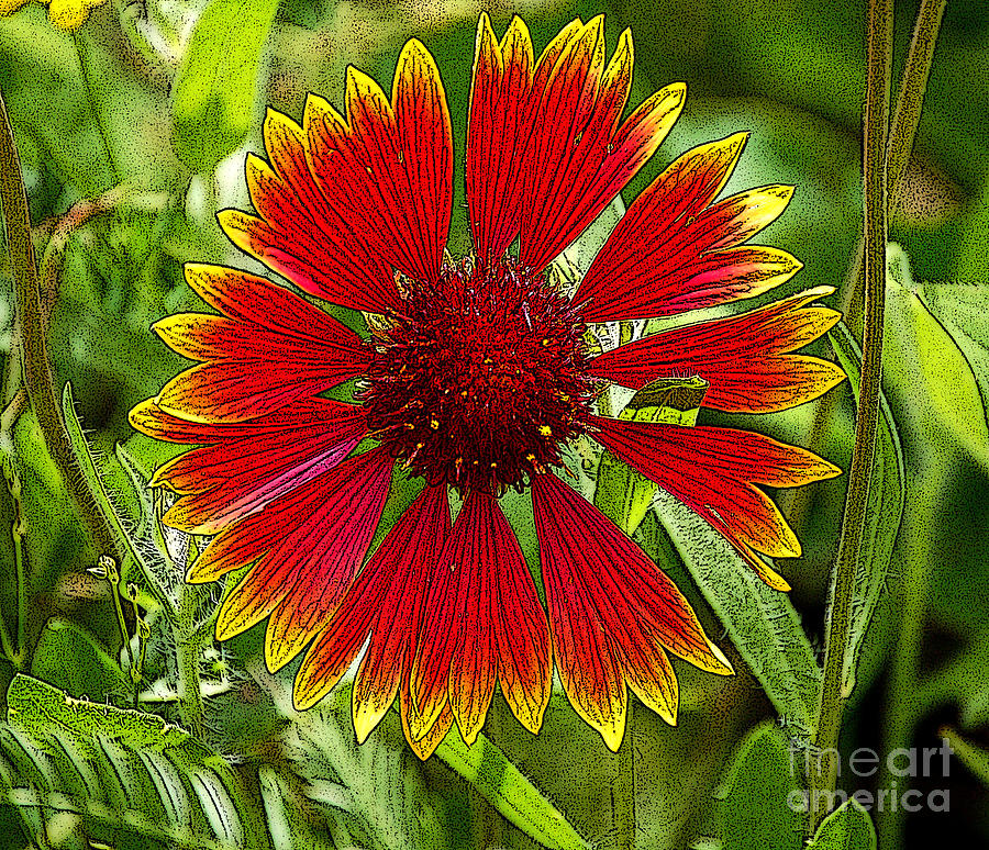 Berry Digital Art - Red Flower by Diane E Berry