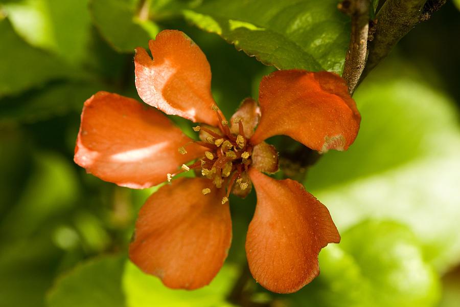 Flower Photograph - Red Flower by Jouko Mikkola