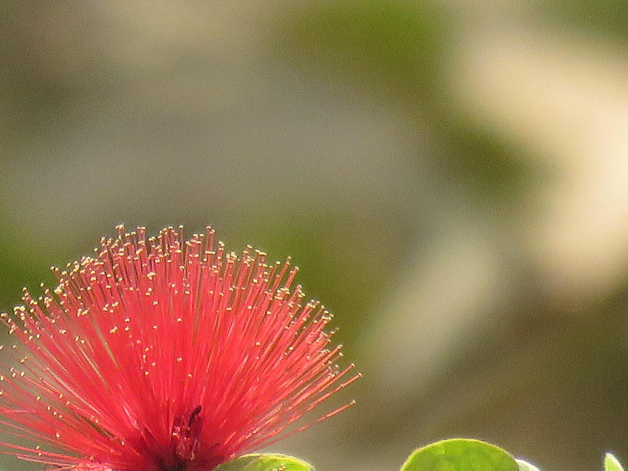 Flower Photograph - Red Flower by Utpal Datta
