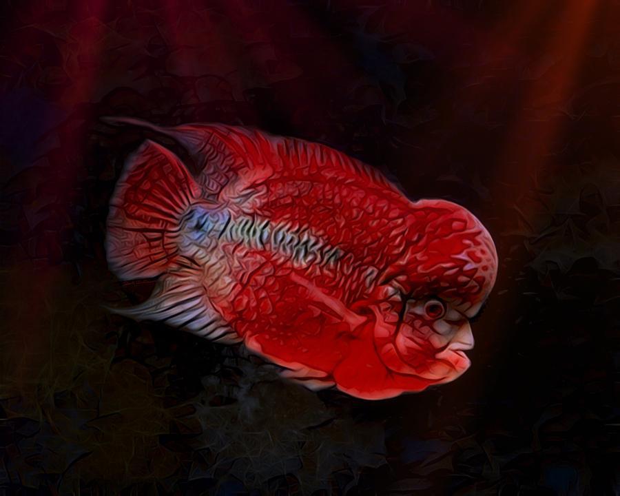 Cichlid Digital Art - Red Flowerhorn Cichlid by Scott Wallace Digital Designs