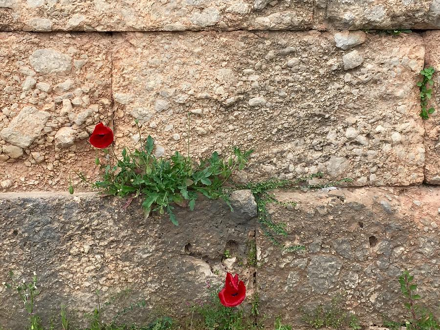 Red Flowers Photograph - Red Flowers In Ruins by Leslie Brashear