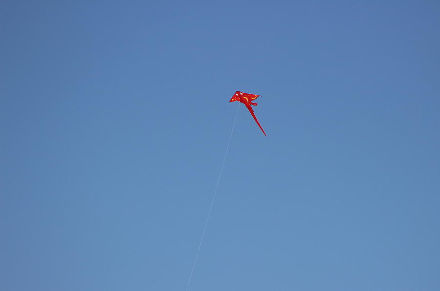Kite Photograph - Red Flying Stingray by Colleen Cornelius